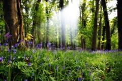 4 найденный рай стоковое изображение rf