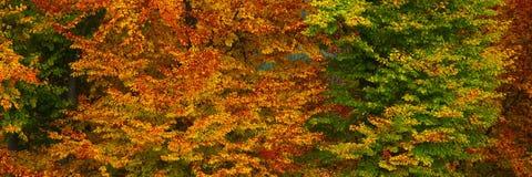 4-ое октября Стоковые Фотографии RF
