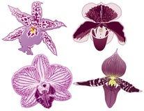 4 орхидеи бесплатная иллюстрация