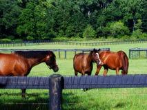 4 пася лошади Стоковое Изображение RF