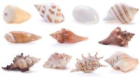 4 различных раковины моря Стоковое фото RF