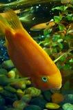 4 рыбы Стоковое фото RF