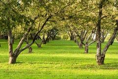 4 рядка парка Стоковая Фотография