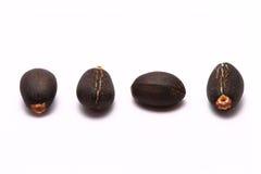 4 семени Curcas Jatropha стоковое изображение rf