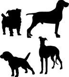 4 собаки Стоковые Фото