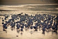 4 чайки Стоковое фото RF
