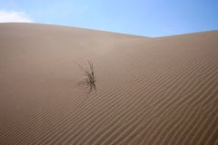 4个沙丘草 免版税库存图片