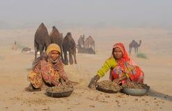 4 2009 kamel puskar ganska november Royaltyfria Bilder