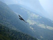 4鸟 免版税图库摄影