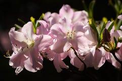 Нежность 4. весны. Стоковое Фото