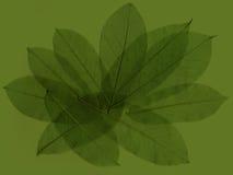 4 abstrakcjonistycznego liści Zdjęcia Stock