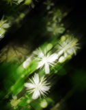 4 abstrakt blommor Arkivbild