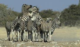 4 afrikanska djur Arkivfoton