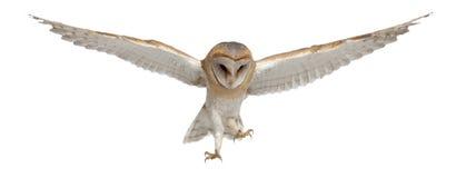 4 alba stajni latających miesiąc stary sowy tyto Obrazy Royalty Free
