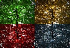 4 alberi Fotografie Stock Libere da Diritti