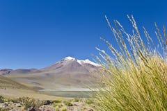 4 altiplano Chile miniques Fotografia Stock