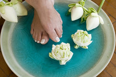 4 aromatherapy fot blommar lotusblommabrunnsorten Arkivbild
