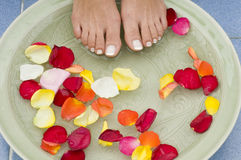 4 aromatherapy fot brunnsortvatten Royaltyfri Foto