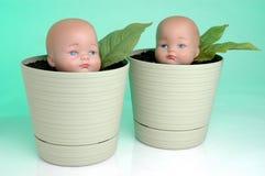 4 baby growing Стоковое Изображение