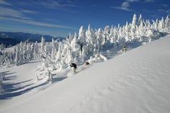 4 backcountry滑雪 免版税库存照片
