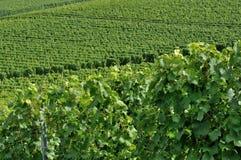 4 baden холмистый виноградник Стоковая Фотография RF