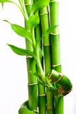 4 bamboo свежей Стоковое Изображение RF