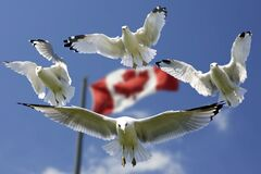 4 Birds Flying in Mid Air With Flag of Canada Behind during Daytime Royalty Free Stock Image