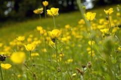 4 blommor royaltyfria foton