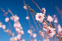 4 blommor royaltyfri fotografi
