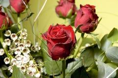 4 blommor Arkivbild