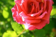 4 blommor Royaltyfria Bilder