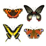 4 butterfly set for design Stock Photo