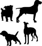 4 cães Fotos de Stock