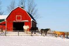 4 cavalli ad un granaio rosso Fotografia Stock Libera da Diritti