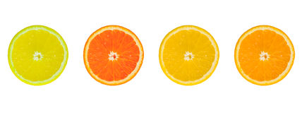 4 citrusa skivor Arkivfoto