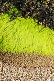 4 colors. At the beach, detail of sand and algae royalty free stock photography