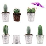 4 concepts de cactus Photo libre de droits
