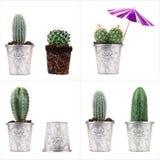 4 concetti del cactus Fotografia Stock Libera da Diritti