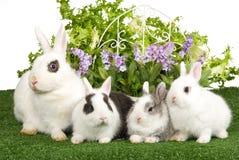 4 conejitos en césped verde con las flores Fotografía de archivo libre de regalías