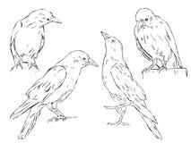 4 cuervos Fotografía de archivo