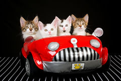 4 Cute kittens in red soft toy car. On black background fabric stock images