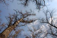 4 drzewa Obrazy Stock