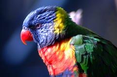 4 egzotycznych ptaków Fotografia Stock