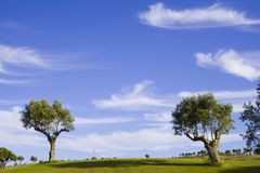 4 ensamma trees Royaltyfria Foton