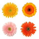4 fiori Immagine Stock Libera da Diritti