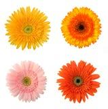 4 flores Imagen de archivo libre de regalías