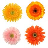 4 flowers. Four flowers isolated on white royalty free stock photography