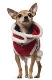 4 gammala år för korsninghund Arkivbild