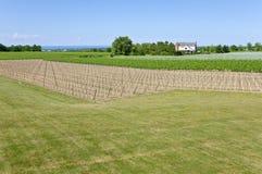 4 gronowych winogradów winnicy potomstwa Zdjęcia Stock