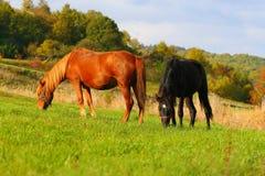 4 häst två Arkivfoto